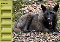 Im Rudel Zuhause - Der Wolf (Wandkalender 2019 DIN A2 quer) - Produktdetailbild 8