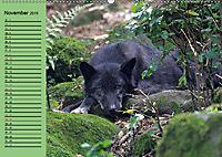 Im Rudel Zuhause - Der Wolf (Wandkalender 2019 DIN A2 quer) - Produktdetailbild 11