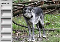 Im Rudel Zuhause - Der Wolf (Wandkalender 2019 DIN A2 quer) - Produktdetailbild 10