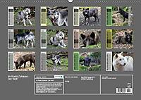 Im Rudel Zuhause - Der Wolf (Wandkalender 2019 DIN A2 quer) - Produktdetailbild 13