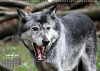 Im Rudel Zuhause - Der Wolf (Wandkalender 2019 DIN A3 quer) - Produktdetailbild 2