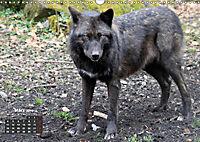 Im Rudel Zuhause - Der Wolf (Wandkalender 2019 DIN A3 quer) - Produktdetailbild 3