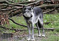 Im Rudel Zuhause - Der Wolf (Wandkalender 2019 DIN A3 quer) - Produktdetailbild 10