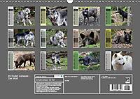 Im Rudel Zuhause - Der Wolf (Wandkalender 2019 DIN A3 quer) - Produktdetailbild 13