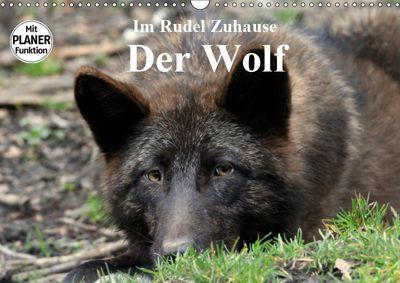 Im Rudel Zuhause - Der Wolf (Wandkalender 2019 DIN A3 quer), Arno Klatt