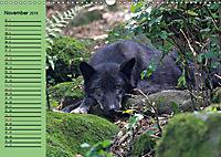 Im Rudel Zuhause - Der Wolf (Wandkalender 2019 DIN A3 quer) - Produktdetailbild 11
