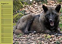 Im Rudel Zuhause - Der Wolf (Wandkalender 2019 DIN A3 quer) - Produktdetailbild 8