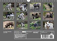 Im Rudel Zuhause - Der Wolf (Wandkalender 2019 DIN A4 quer) - Produktdetailbild 13