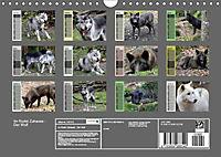 Im Rudel Zuhause - Der Wolf (Wandkalender 2019 DIN A4 quer) - Produktdetailbild 3