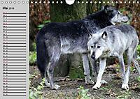 Im Rudel Zuhause - Der Wolf (Wandkalender 2019 DIN A4 quer) - Produktdetailbild 4