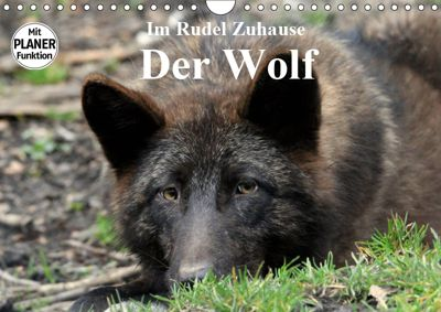 Im Rudel Zuhause - Der Wolf (Wandkalender 2019 DIN A4 quer), Arno Klatt