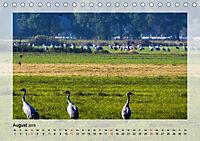 Impressionen aus dem Tister Bauernmoor (Tischkalender 2019 DIN A5 quer) - Produktdetailbild 8