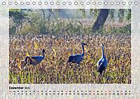 Impressionen aus dem Tister Bauernmoor (Tischkalender 2019 DIN A5 quer) - Produktdetailbild 12