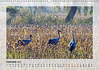 Impressionen aus dem Tister Bauernmoor (Wandkalender 2019 DIN A3 quer) - Produktdetailbild 12