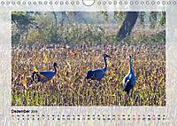 Impressionen aus dem Tister Bauernmoor (Wandkalender 2019 DIN A4 quer) - Produktdetailbild 12