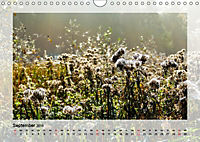Impressionen aus dem Tister Bauernmoor (Wandkalender 2019 DIN A4 quer) - Produktdetailbild 9