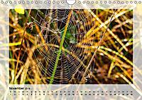 Impressionen aus dem Tister Bauernmoor (Wandkalender 2019 DIN A4 quer) - Produktdetailbild 11