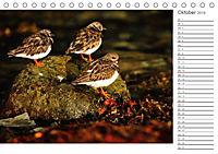 Impressionen aus Schottland (Tischkalender 2019 DIN A5 quer) - Produktdetailbild 10
