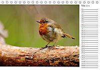 Impressionen aus Schottland (Tischkalender 2019 DIN A5 quer) - Produktdetailbild 5