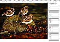 Impressionen aus Schottland (Wandkalender 2019 DIN A3 quer) - Produktdetailbild 10