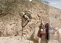 Impressionen Kameltrekking Sinai 2019 (Wandkalender 2019 DIN A3 quer) - Produktdetailbild 3