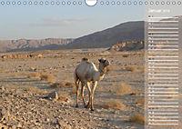 Impressionen Kameltrekking Sinai 2019 (Wandkalender 2019 DIN A4 quer) - Produktdetailbild 1