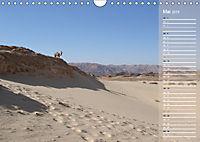 Impressionen Kameltrekking Sinai 2019 (Wandkalender 2019 DIN A4 quer) - Produktdetailbild 5