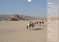 Impressionen Kameltrekking Sinai 2019 (Wandkalender 2019 DIN A4 quer) - Produktdetailbild 3