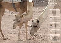 Impressionen Kameltrekking Sinai 2019 (Wandkalender 2019 DIN A4 quer) - Produktdetailbild 8