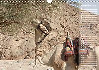 Impressionen Kameltrekking Sinai 2019 (Wandkalender 2019 DIN A4 quer) - Produktdetailbild 11