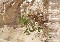 Impressionen Kameltrekking Sinai 2019 (Wandkalender 2019 DIN A4 quer) - Produktdetailbild 12
