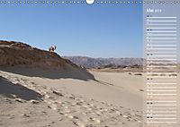 Impressionen Kameltrekking Sinai 2019 (Wandkalender 2019 DIN A3 quer) - Produktdetailbild 5