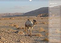 Impressionen Kameltrekking Sinai 2019 (Wandkalender 2019 DIN A3 quer) - Produktdetailbild 1