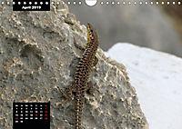 Impressions of Malta (Wall Calendar 2019 DIN A4 Landscape) - Produktdetailbild 4