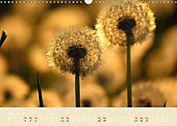 Inconspicuous Beauty - Dandelion (Wall Calendar 2019 DIN A3 Landscape) - Produktdetailbild 5