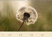 Inconspicuous Beauty - Dandelion (Wall Calendar 2019 DIN A3 Landscape) - Produktdetailbild 1