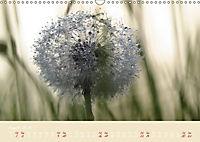Inconspicuous Beauty - Dandelion (Wall Calendar 2019 DIN A3 Landscape) - Produktdetailbild 3