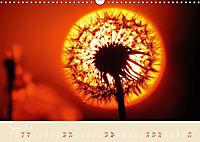 Inconspicuous Beauty - Dandelion (Wall Calendar 2019 DIN A3 Landscape) - Produktdetailbild 8