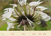 Inconspicuous Beauty - Dandelion (Wall Calendar 2019 DIN A3 Landscape) - Produktdetailbild 12