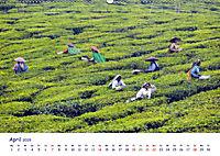 Indien - Eine Fotoreise vom Norden bis in den Süden (Wandkalender 2019 DIN A2 quer) - Produktdetailbild 4