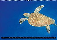 Indonesien: Gili Inseln (Wandkalender 2019 DIN A2 quer) - Produktdetailbild 4