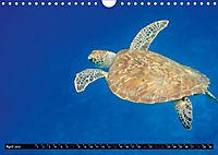 Indonesien: Gili Inseln (Wandkalender 2019 DIN A4 quer) - Produktdetailbild 4
