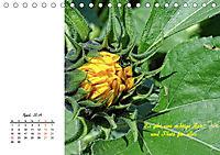 Innehalten in der Natur ... mit Weisheiten und Sprichworten der Indianer (Tischkalender 2019 DIN A5 quer) - Produktdetailbild 4