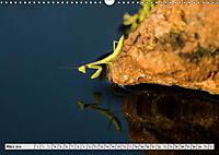 INSEKTEN GANZ NAHE (Wandkalender 2019 DIN A3 quer) - Produktdetailbild 9