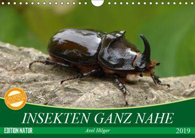 INSEKTEN GANZ NAHE (Wandkalender 2019 DIN A4 quer), Axel Hilger