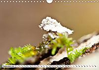 INSEKTEN GANZ NAHE (Wandkalender 2019 DIN A4 quer) - Produktdetailbild 9