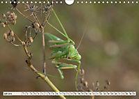 INSEKTEN GANZ NAHE (Wandkalender 2019 DIN A4 quer) - Produktdetailbild 7