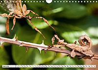 INSEKTEN GANZ NAHE (Wandkalender 2019 DIN A4 quer) - Produktdetailbild 6