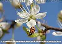 INSEKTEN GANZ NAHE (Wandkalender 2019 DIN A4 quer) - Produktdetailbild 5