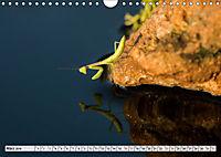 INSEKTEN GANZ NAHE (Wandkalender 2019 DIN A4 quer) - Produktdetailbild 3
